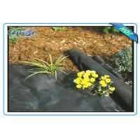Quality Anti UV Non Woven PP Ground Cover / Weed Control Fabric / Landscape Fabric wholesale