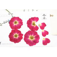 China Red Rose Real Pressed Flowers Diameter 3 CM For Valentine'S Day Holidays wholesale