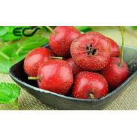 China Freeze - Dried Skin Care Supplements Hawthorn Berry Powder Boost Immune System wholesale