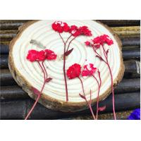 China Red Daisy Material DIY Pressed Flowers Dried Specimen For Epoxy Cell Phone Case wholesale