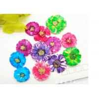 China Small Daisy Natural Real Pressed Flowers True Plants Specimens For DIY Photo Frame wholesale