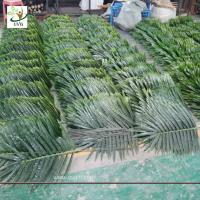 China UVG cheap fake indoor plastic palm tree leaves wholesale for party and events decoration PTR062 wholesale