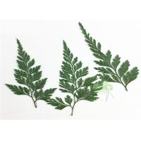 China Green Fern DIY Pressed Flowers 2 Different Size Fit Child Hairpin Decorations wholesale