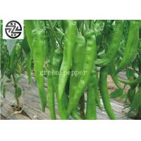 China Natural Long Sweet Peppers Green Color Rich In Carotene Good For Eyes wholesale