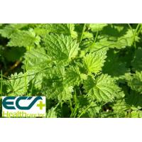 China Multi Function Organic Nettle Leaf Powder Sport Food Supplements Treating Stomach Ache wholesale