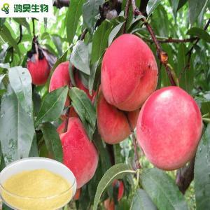 China hot sell fruit juice powder china wholesale wholesale