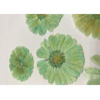 China Mint Green Dyed Dried Pressed Flowers Handmade For Press Art Painting Material wholesale