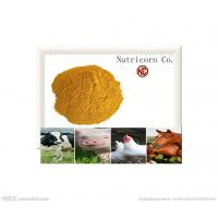 Quality Poultry Feed Corn Gluten Meal/Feed, Chicken Feed for sale