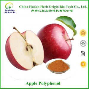 China Apple Polyphenol 95% wholesale