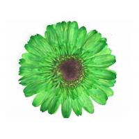 China Dye Absorption Unique Gerbera Pressed Dried Flowers Framed Art For DIY Decoration wholesale
