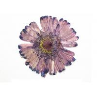 China Purple Gerbera Size 8CM DIY Pressed Flowers For Epoxy Material / Painting Decoration wholesale