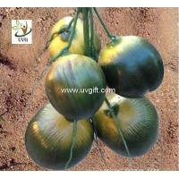 China UVG high simulation plastic artificial coconut for fake palm tree decoration PTR045 wholesale