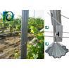 China High Strength Grape Trellis Posts 275G/M2 Hot Galvanized 1.5mm-2.0mm Thickness wholesale