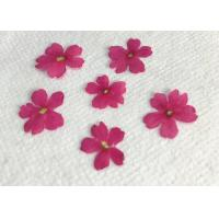 China Wedding Real Pressed Flowers For Specimen , Verbena Handmade Floral Dried Flower wholesale