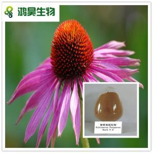 China high Quality Echinacea Purpurea Extract 1%-4% Cichoric Acid wholesale