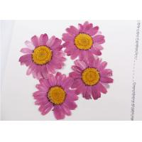 China Dye Absorption DIY Pressed Flowers Chrysanthemum For Washroom Decoration wholesale