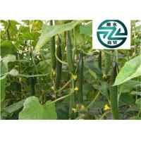 China Rich In Protein Cucumber Family Plants Clearing Away Heat And Toxic Material wholesale
