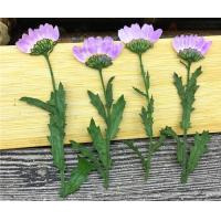 China Purple Dried Chrysanthemum Flower Color Optional For Candle Decoration wholesale