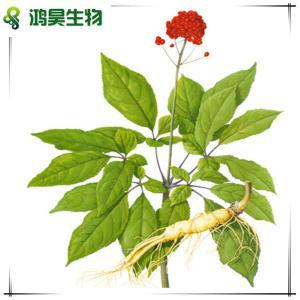 China manufacture supply panax ginseng extract 20% ginsenoside wholesale