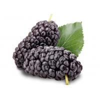 China Nutritional Sugar Control Supplements Organic Mulberry Powder Improve Vision wholesale