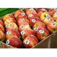China Food Fruit Custom Printed Adhesive Labels Coated Paper Removable Glue wholesale