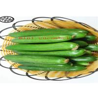 China Healthy Mini Cukes Cucumber Control Blood Pressure And Manage Diabetes wholesale
