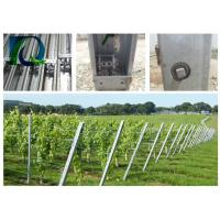 Quality Hot Dipped Galvanized Grape Vine Posts / Heavy Duty Vineyard End Posts For Grape Growing for sale
