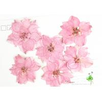 China Eternal Floral Dried Pressed Flowers Larkspur Diameter 3CM For Christmas Decorations wholesale