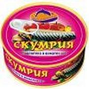 Quality 425g canned Mackerel in vegetable oil/tomato sauce/brine for sale