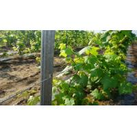 China Outdoor Garden Grape Trellis Posts With Z Shaped Holes 2.7m Height Anti Corrosive wholesale
