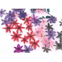 China Time Gems Decorations DIY Pressed Flowers / Hand Pressed Flowers Multicolor wholesale
