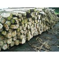 Quality Teak Wood Logs for sale