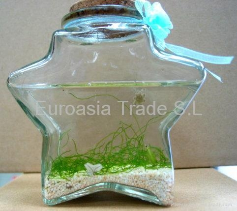 Quality Lucky Star Fish Lucky Star Fish for sale