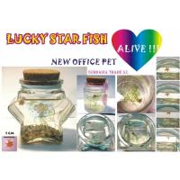 China Lucky Star Fish Lucky Star Fish wholesale