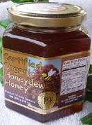 Quality Active 13+ Organic Honeydew Honey in 500 gram Glass Jar for sale