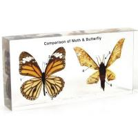 China Animal Comparison 1504 Comparison of Moth & Butterfly wholesale