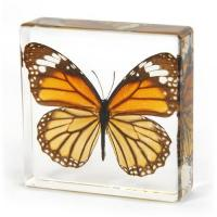 China K20401 Butterfly wholesale